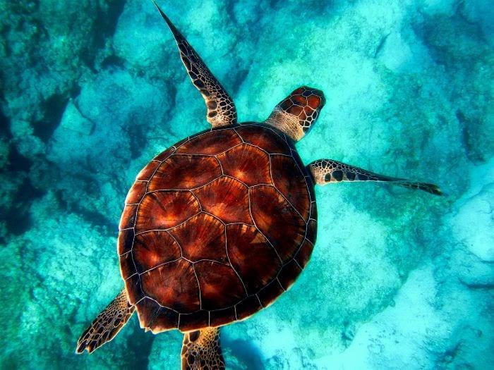 Морская черепаха, Занзибар