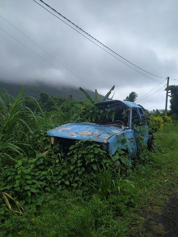 Машина, заросшая растениями