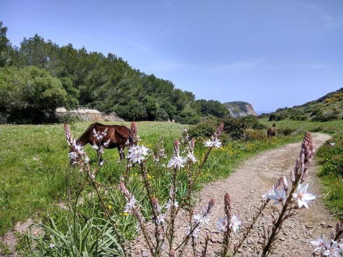 Национальный парк Менорки s'Albufera des Grau