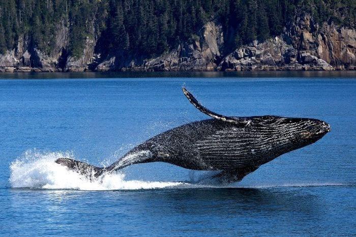 Камчатка кит