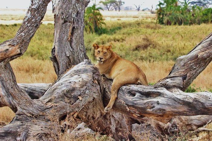 Сафари в парке Серенгети Танзания