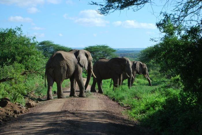 Слоны в парке Тарангире