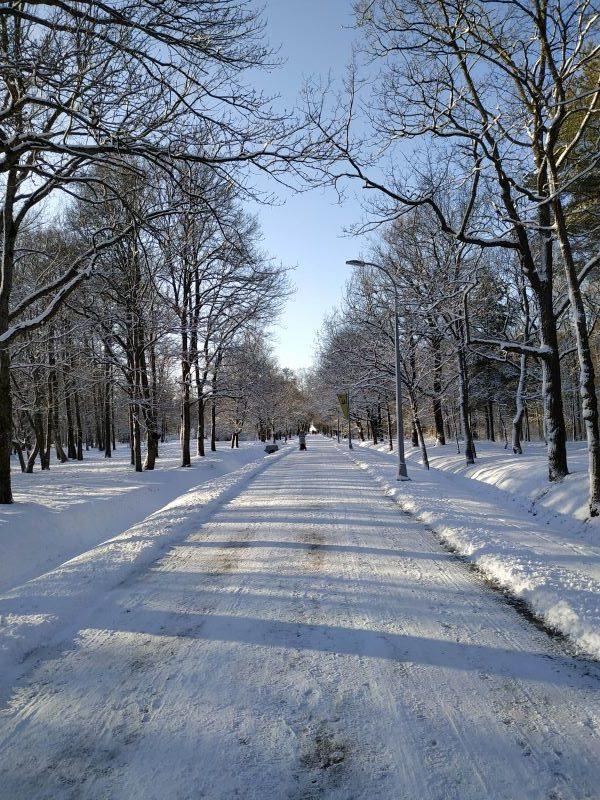 Парк Дубки, Сестрорецк