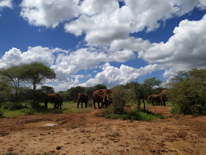 Слоны в национальном парке Тарангире